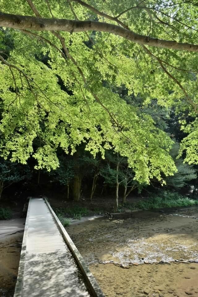 トレイルランコース愛知県5.jpg