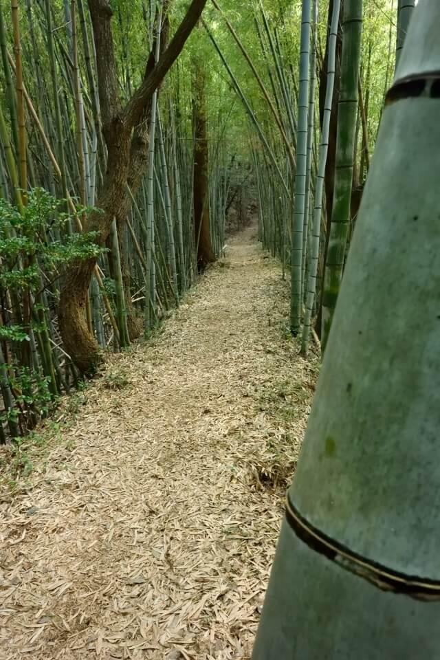 トレイルランコース愛知県7.jpg
