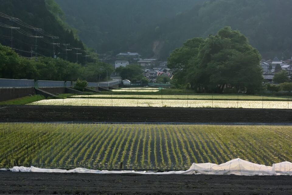 京都一周トレイル_北山コース15.jpg