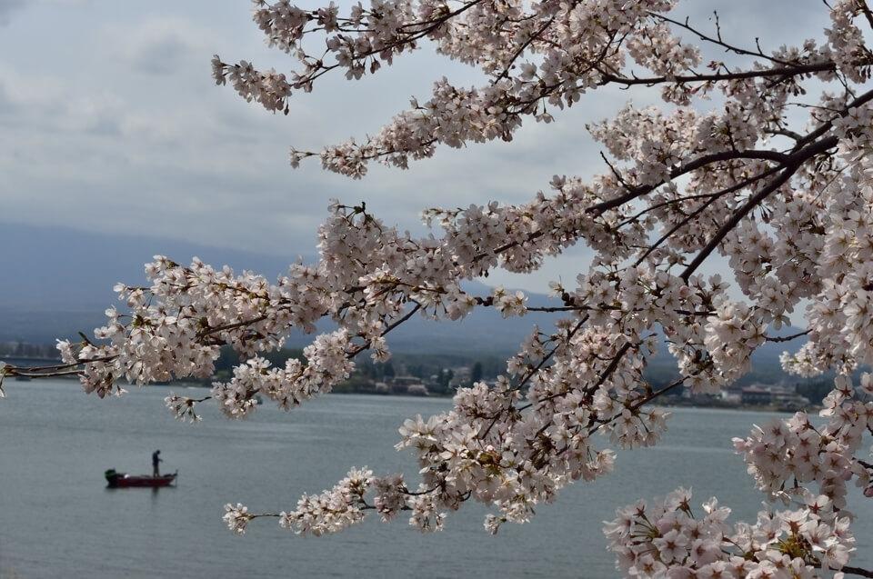 富士五湖_桜名所_写真3.jpg