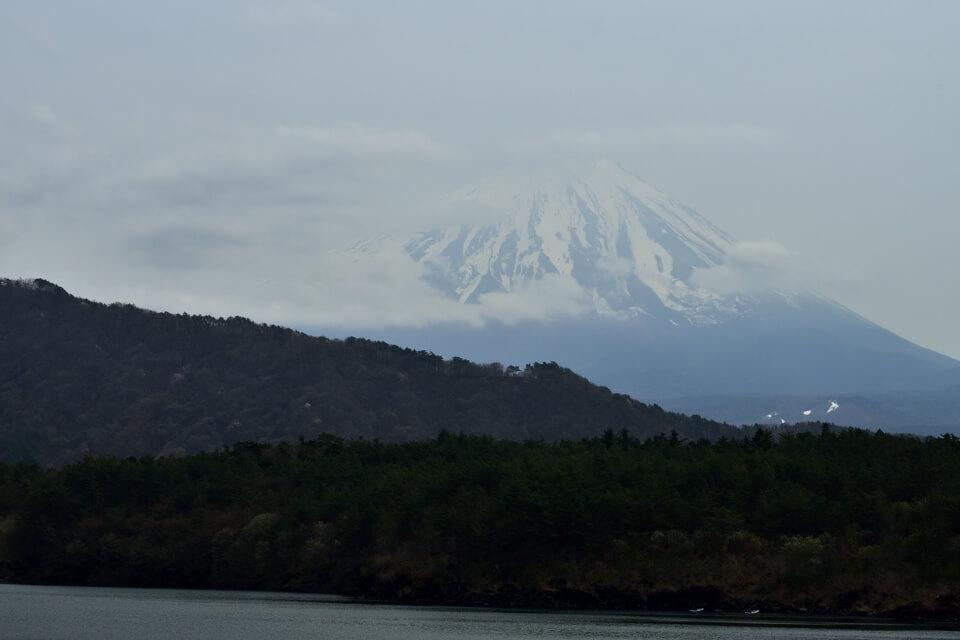 富士五湖_桜名所_写真4.jpg