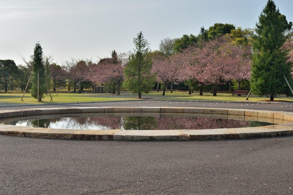 豊田市美術館_桜2.jpg