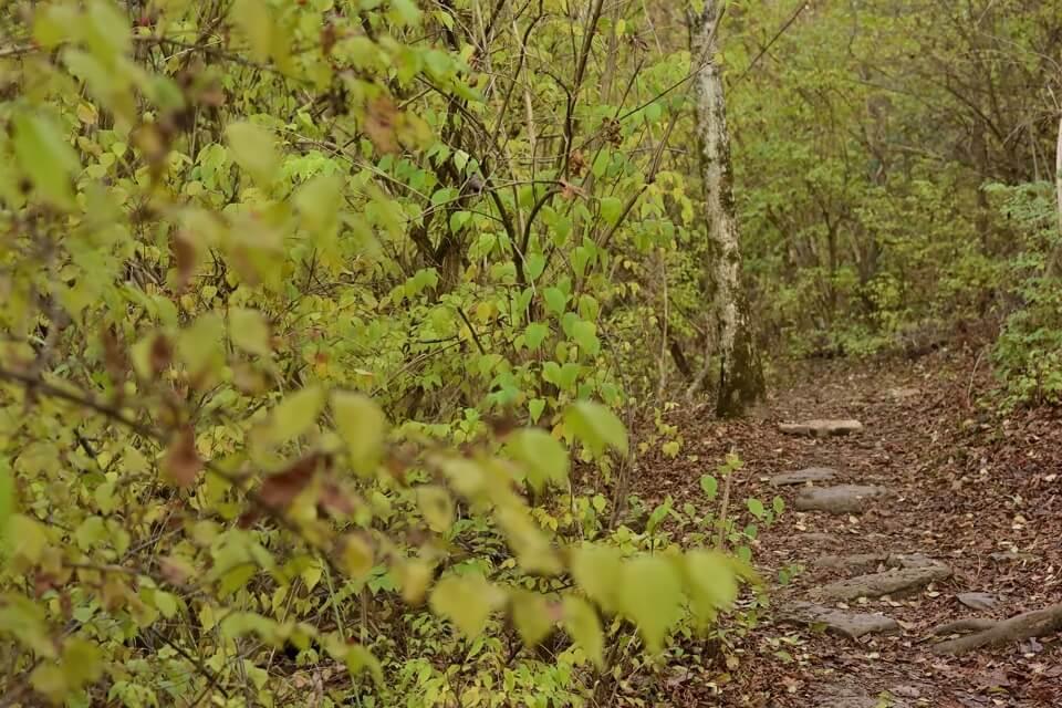 レイヴンランネイチャー自然保護区4.jpg
