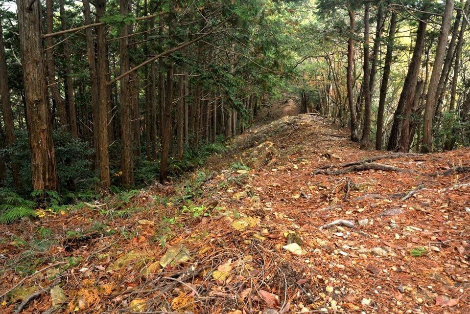 愛知県民の森トレイルランコース5.jpg