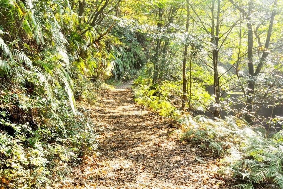 愛知県民の森トレイルランコース13.jpg