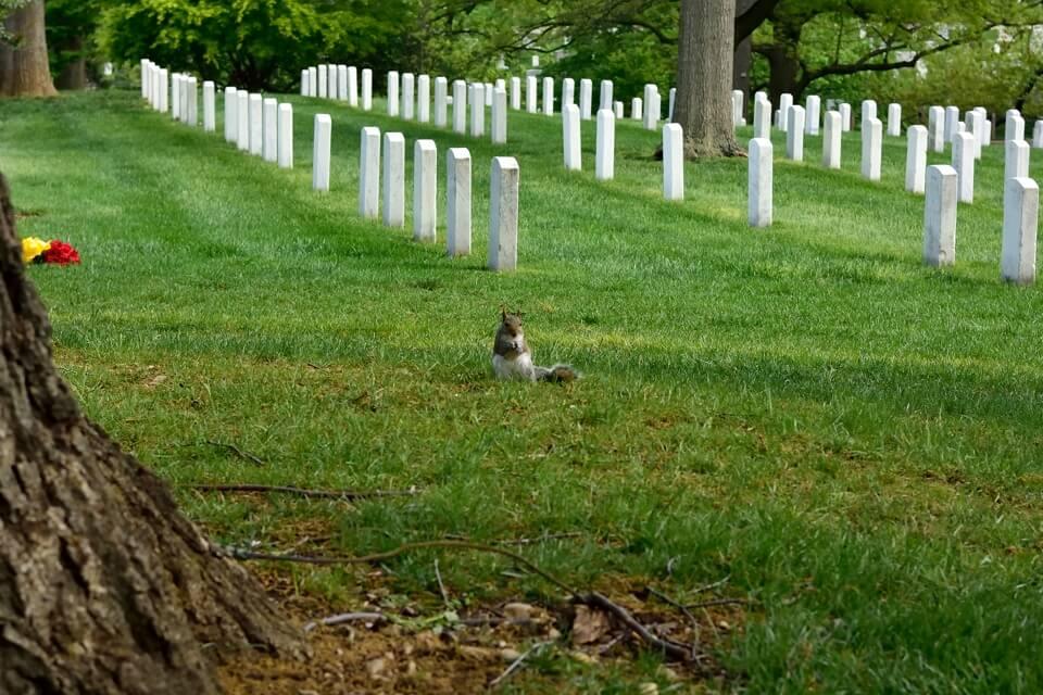 アーリントン墓地_写真5.jpg