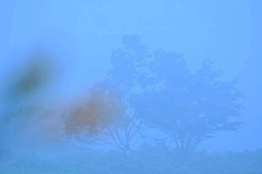 霧ヶ峰写真3.jpg