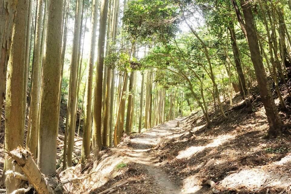 京都一周トレイルランニング東山コース14.jpg
