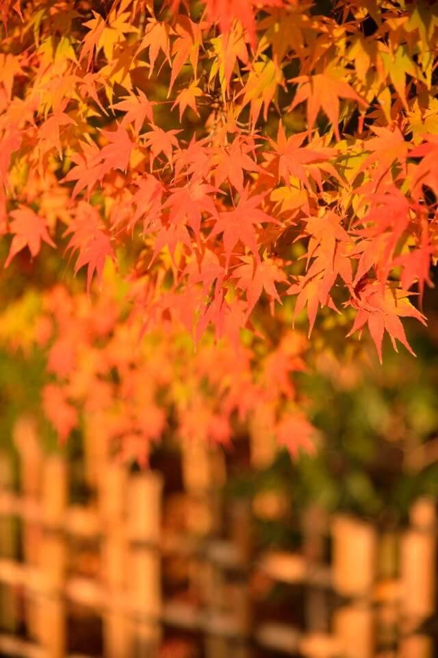 平等院鳳凰堂画像8.jpg