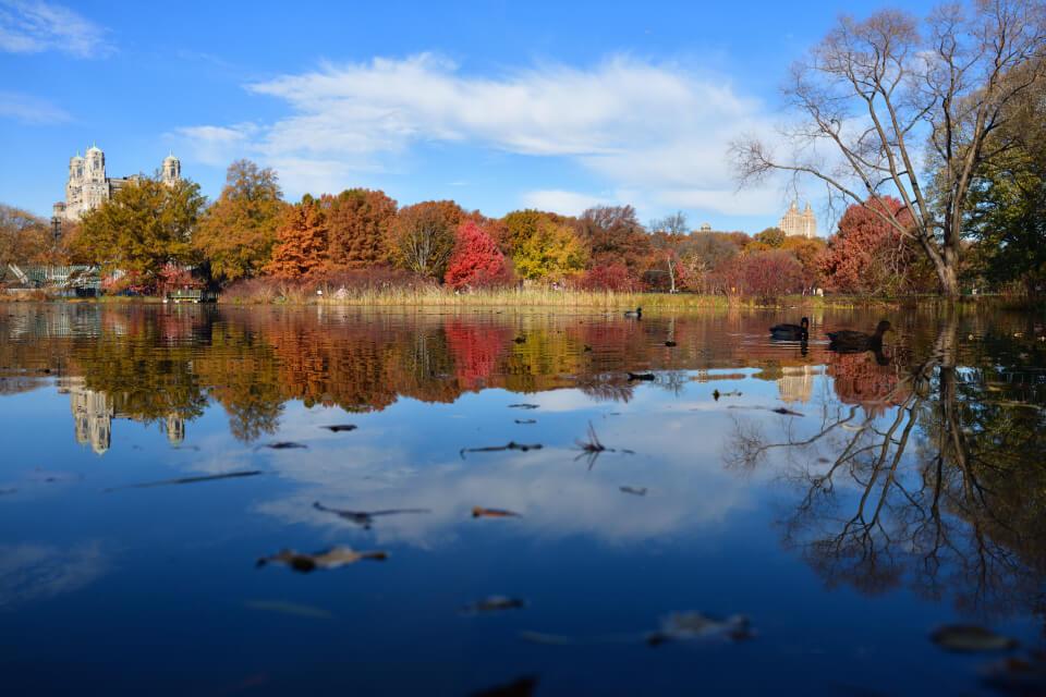 セントラルパーク写真ニューヨーク5.jpg
