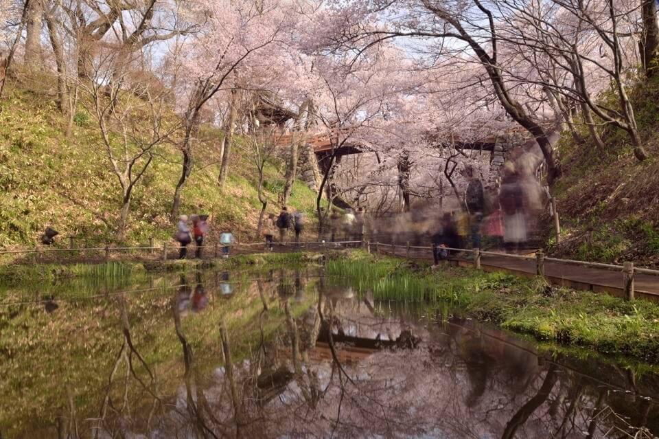 高遠城_桜画像1.jpg