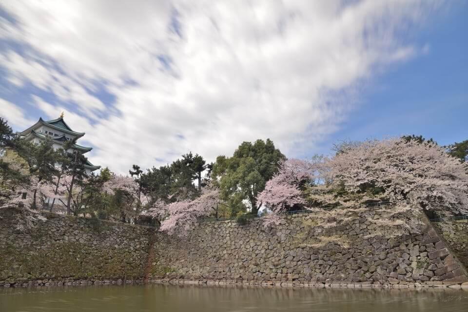 名古屋城_桜画像1.jpg