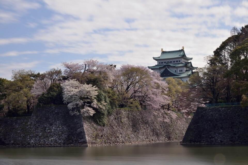 名古屋城_桜画像4.jpg