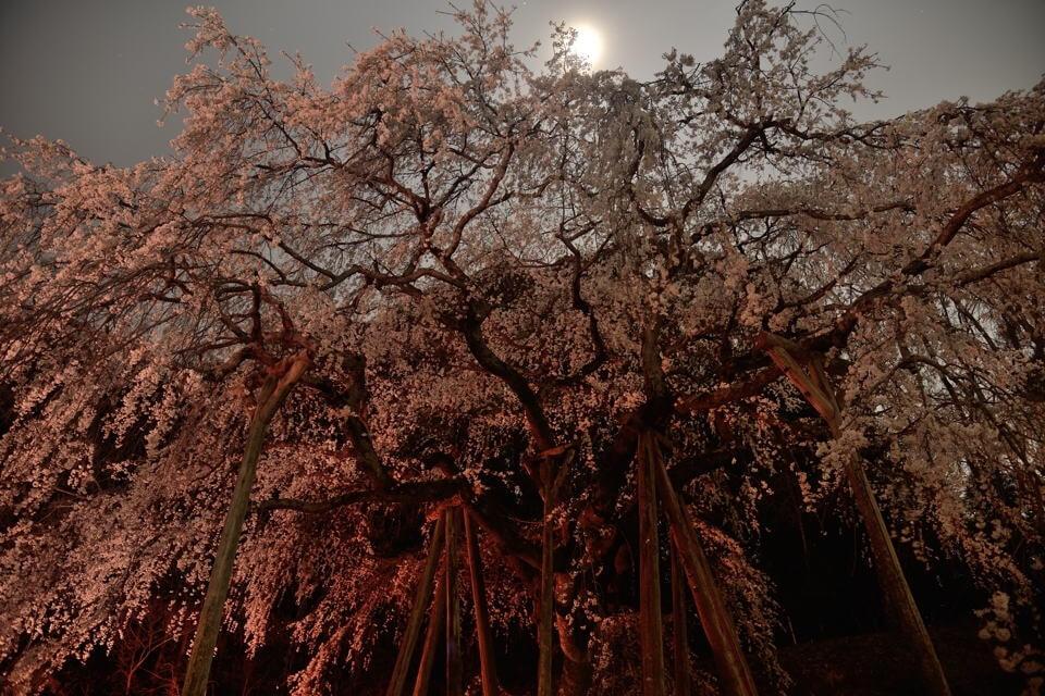 岡崎・奥山田_夜桜撮影2.jpg