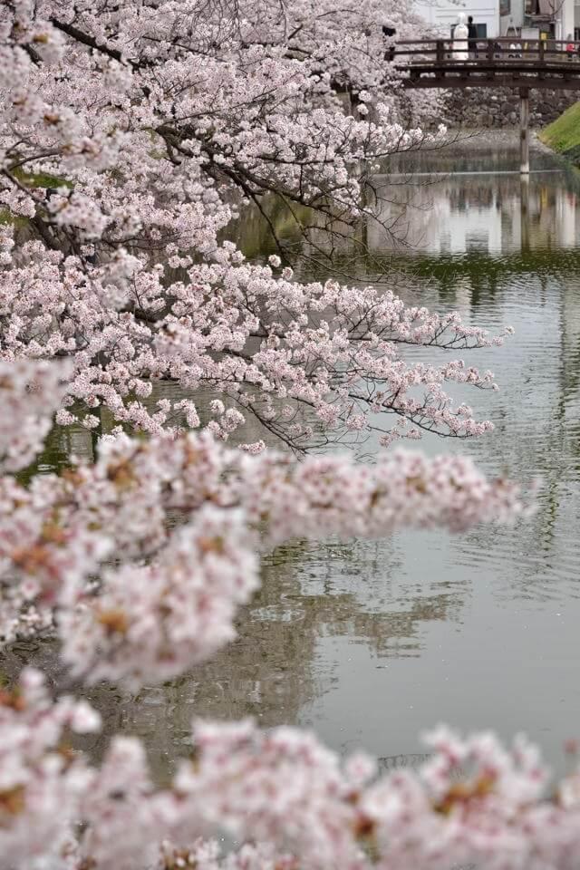 松本城_画像4.jpg