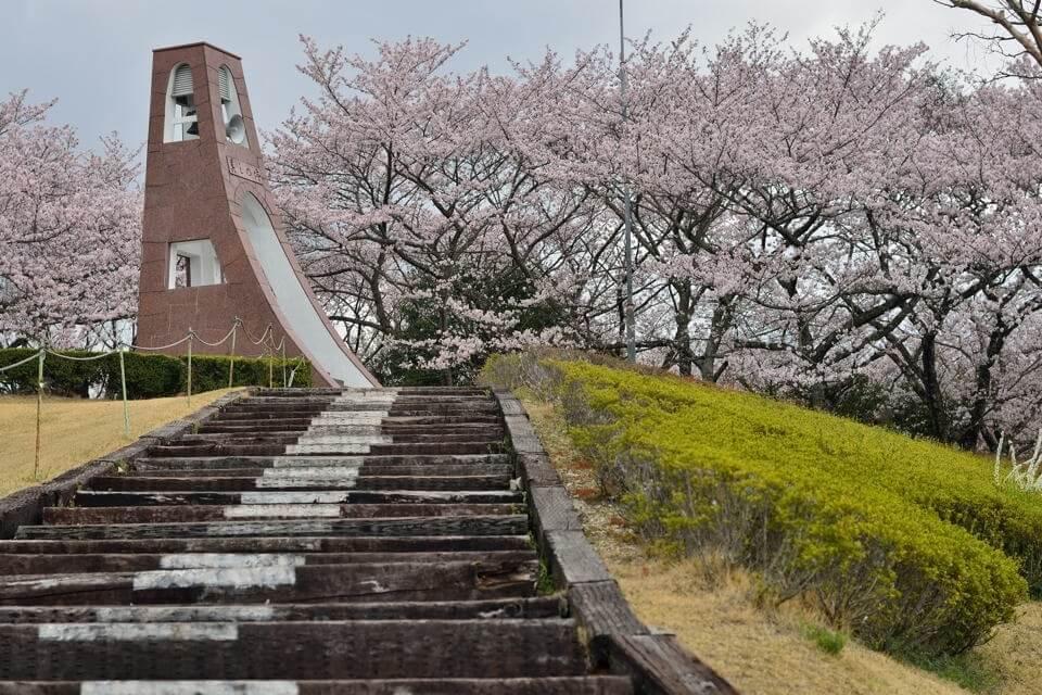 鞍ヶ池公園_桜画像8.jpg