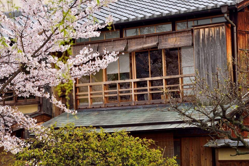 桜写真_祇園白川1.jpg