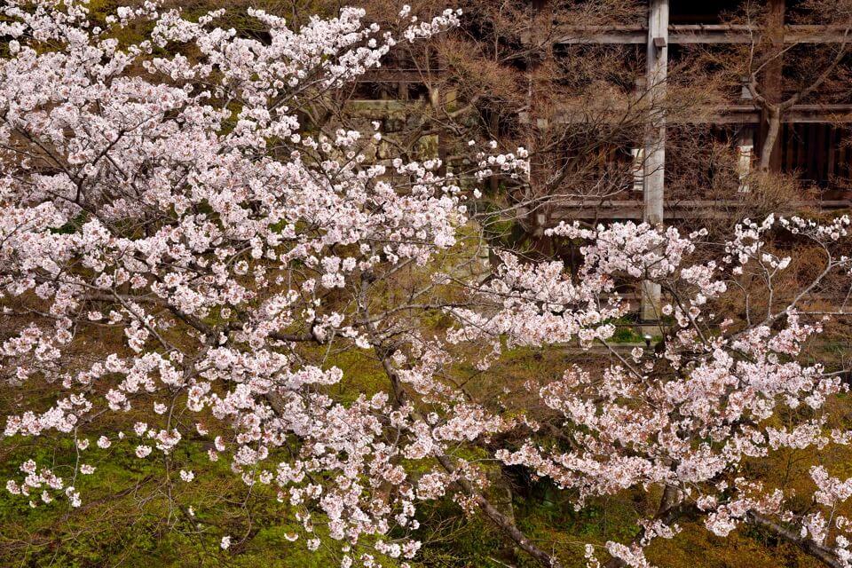 清水寺画像2.jpg