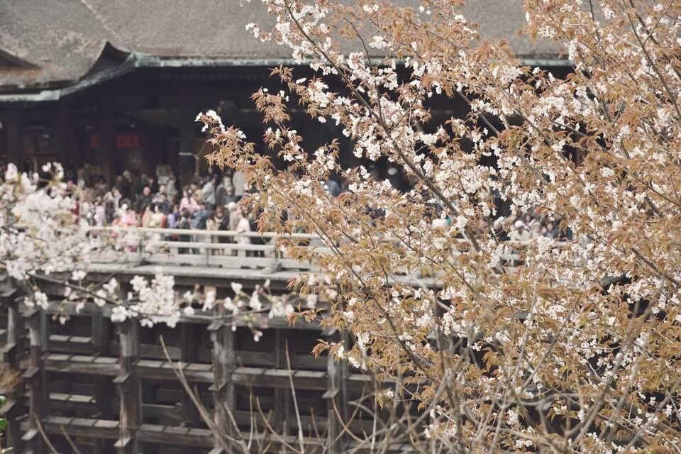 清水寺画像4.jpg