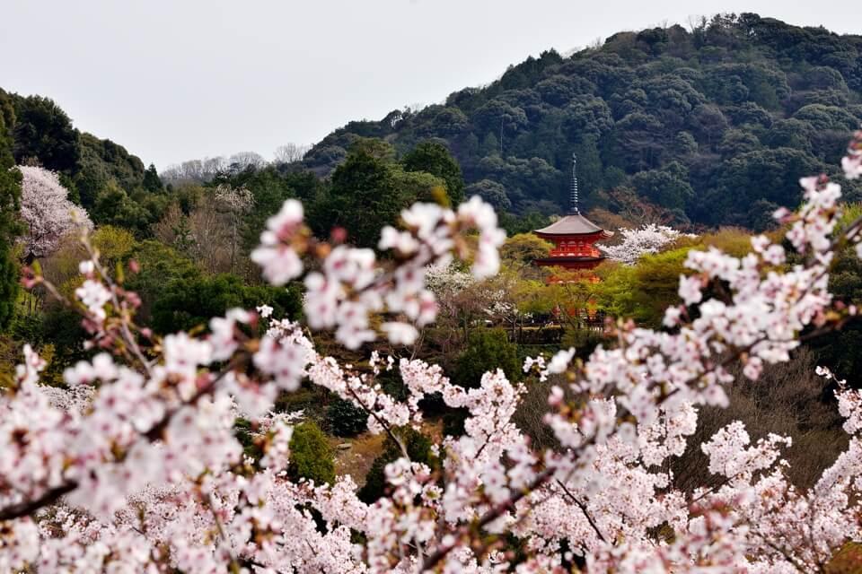 清水寺画像8.jpg