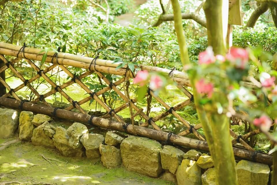 竜安寺_方丈庭園_桜写真3.jpg