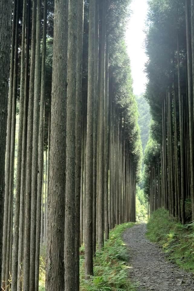 京都一周トレイル_西山コース18.jpg