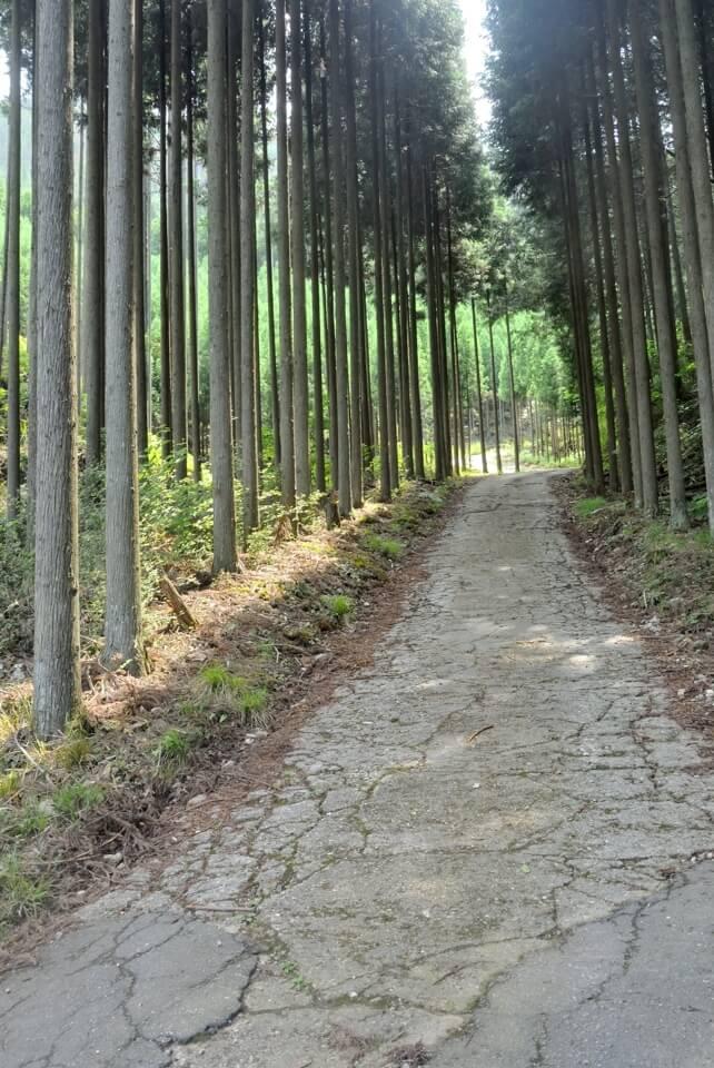 京都一周トレイル_西山コース21.jpg