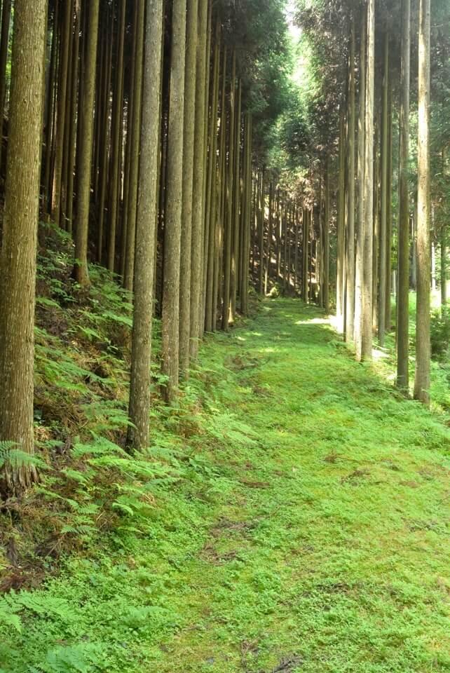 京都一周トレイル_西山コース27.jpg