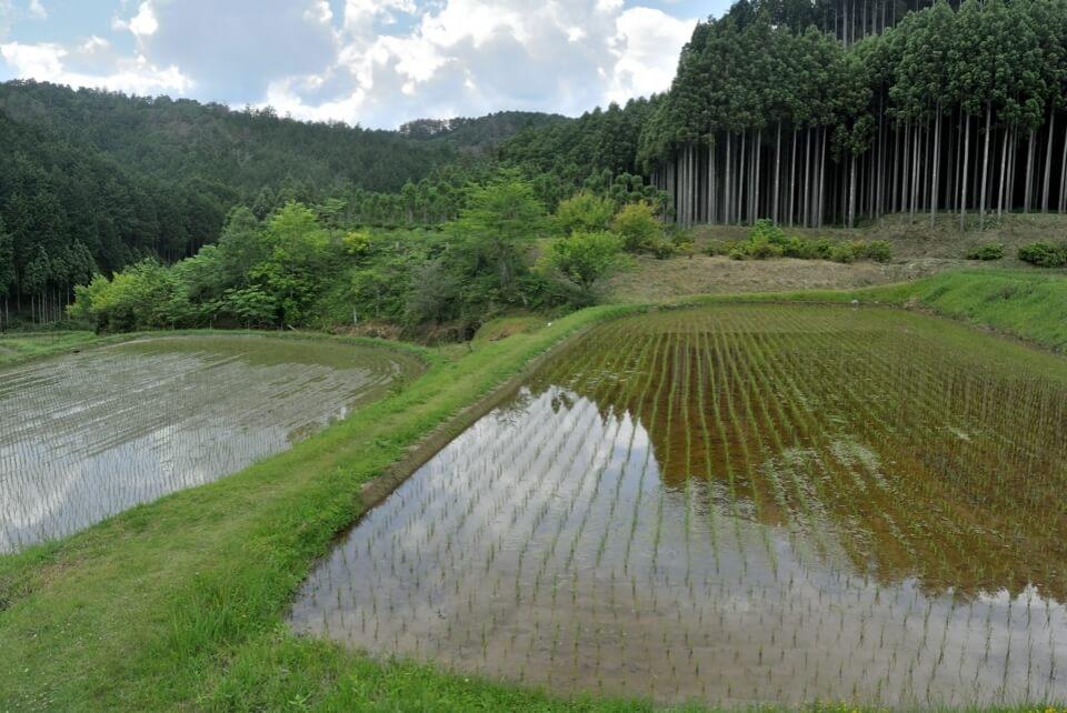 京都一周トレイル_西山コース31.jpg