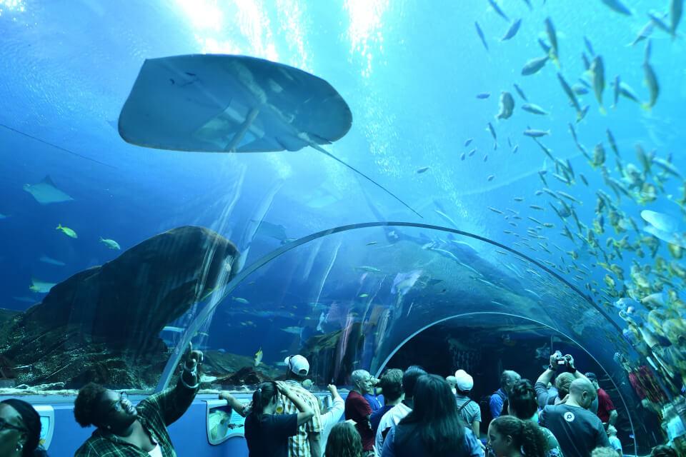 ジョージア水族館2.jpg