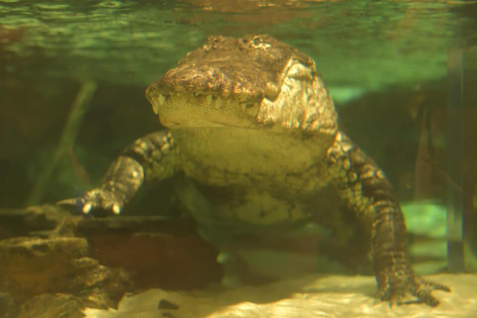 ニューポート水族館写真3.jpg