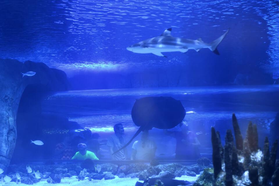 ニューポート水族館写真6.jpg