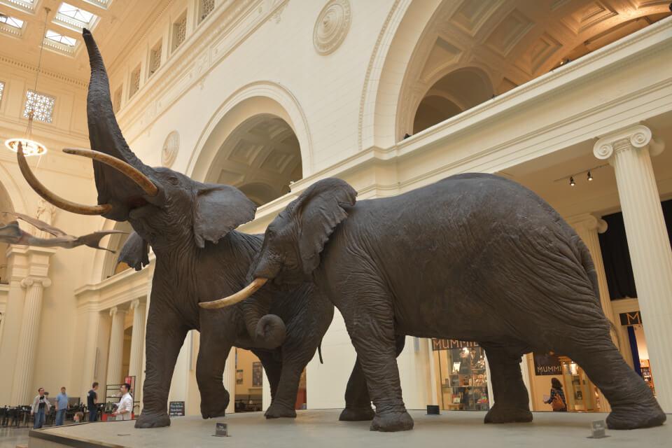 フィールド自然史博物館シカゴ1.jpg