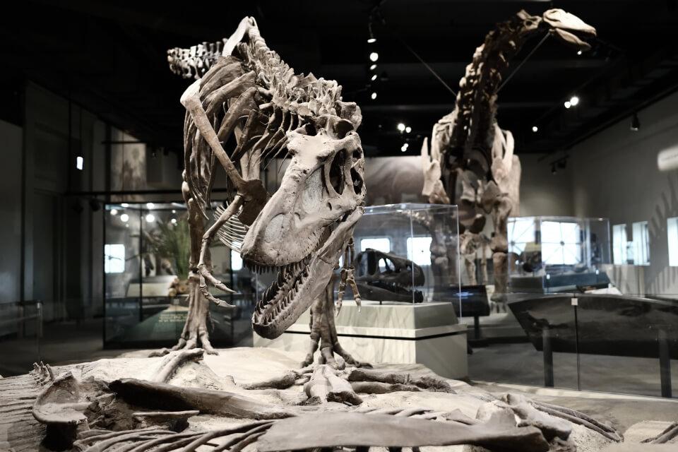 フィールド自然史博物館シカゴ2.jpg