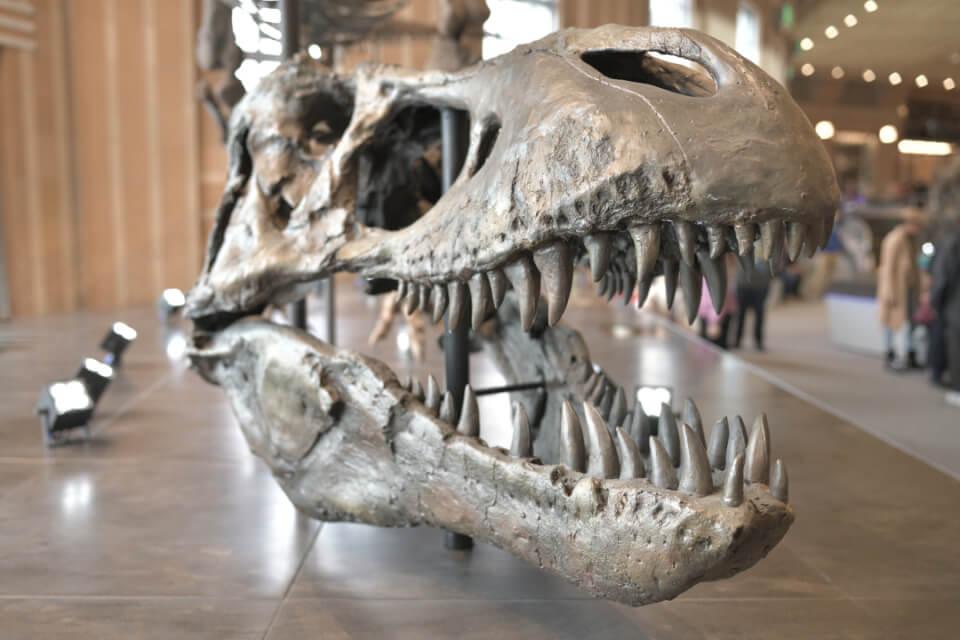 シンシナティ自然科学博物館7.jpg