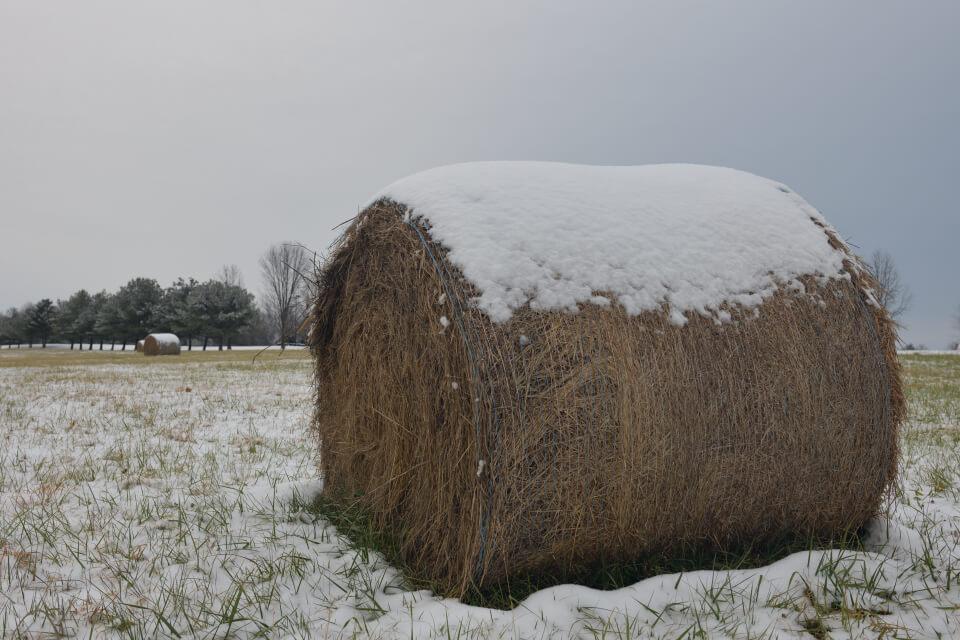 芝生コロンの雪添え1.jpg