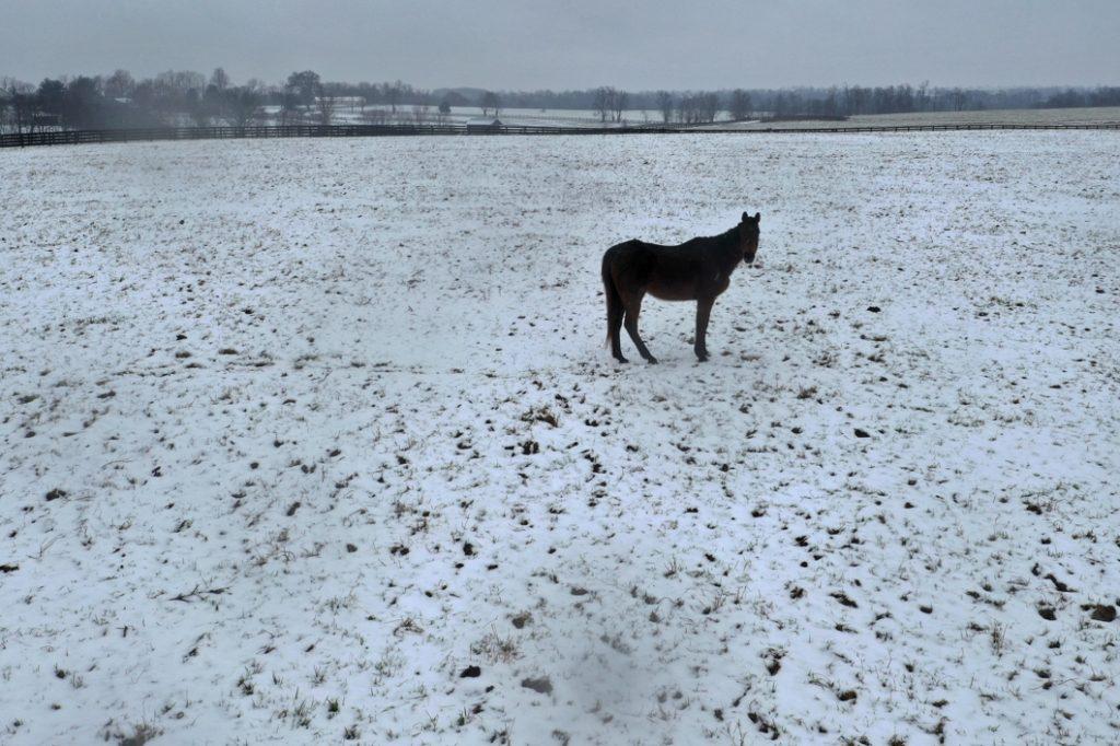 雪は撮影チャンス