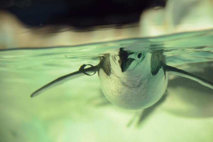 名古屋港水族館の写真