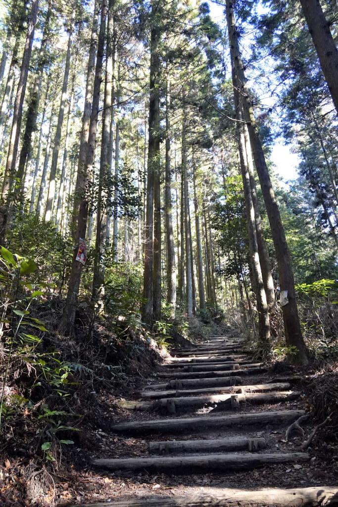 猿投山トレイルランニングコース写真