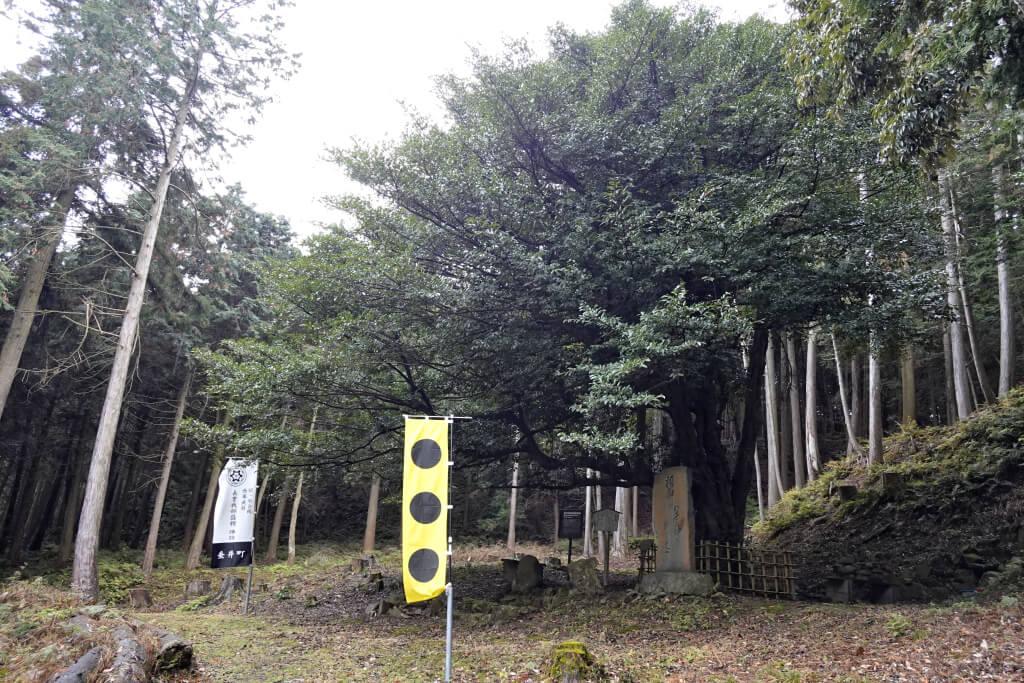 関ヶ原トレイルラン写真