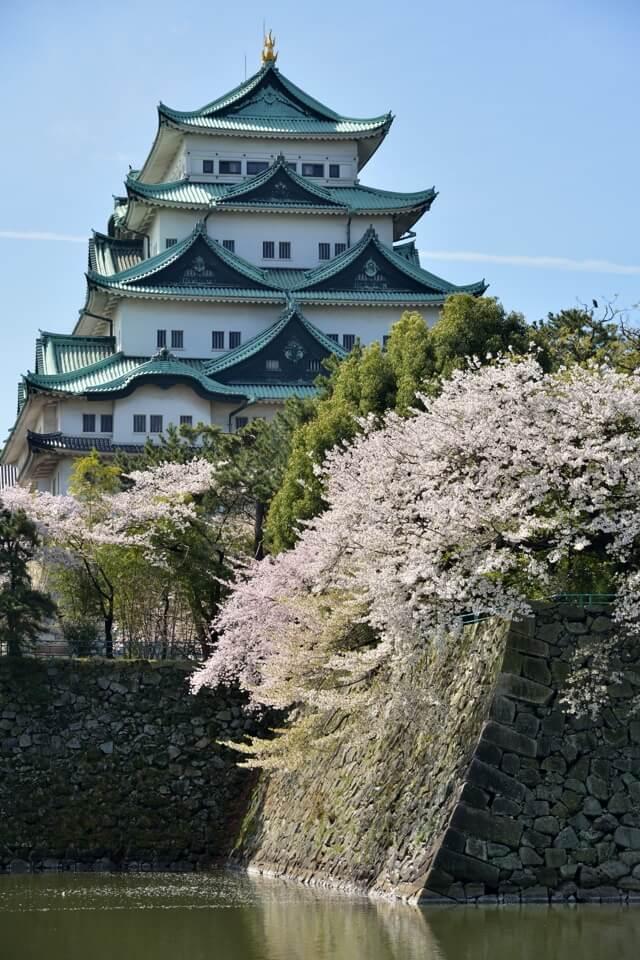名古屋城の桜満開名所