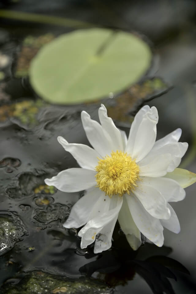 掛川花鳥園・温室と花の写真