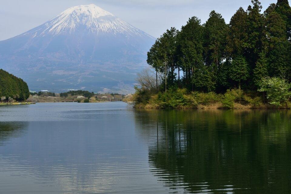 田貫湖・桜と富士山の写真