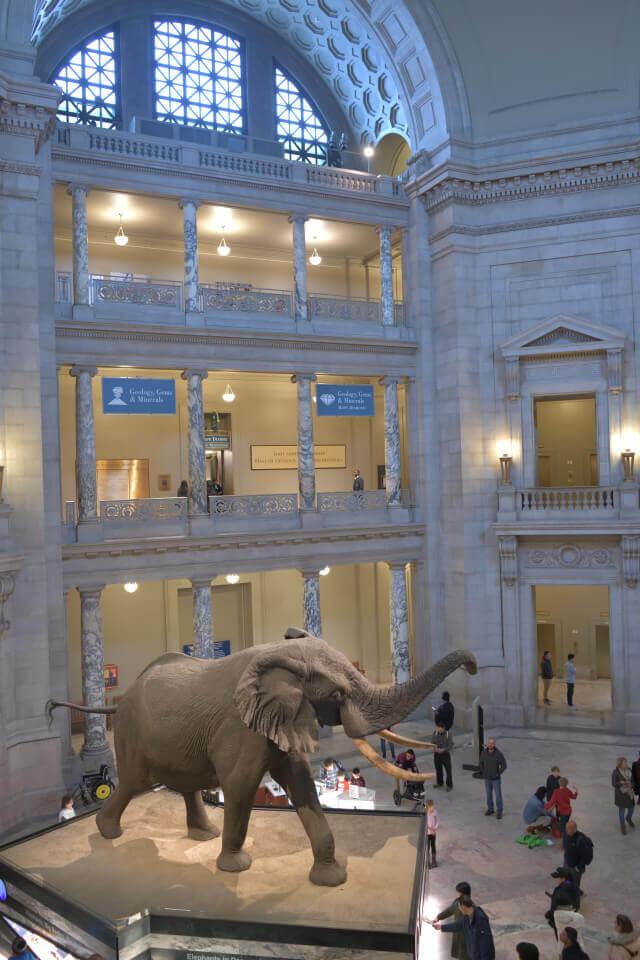 アメリカ国立自然史博物館の写真