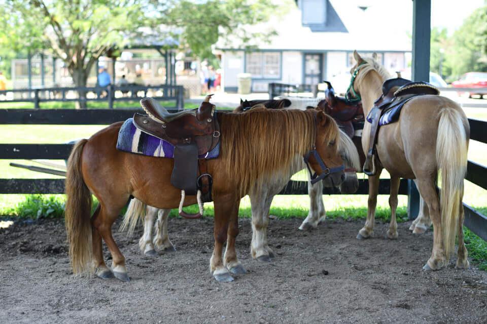 ケンタッキーホースパークで乗馬体験