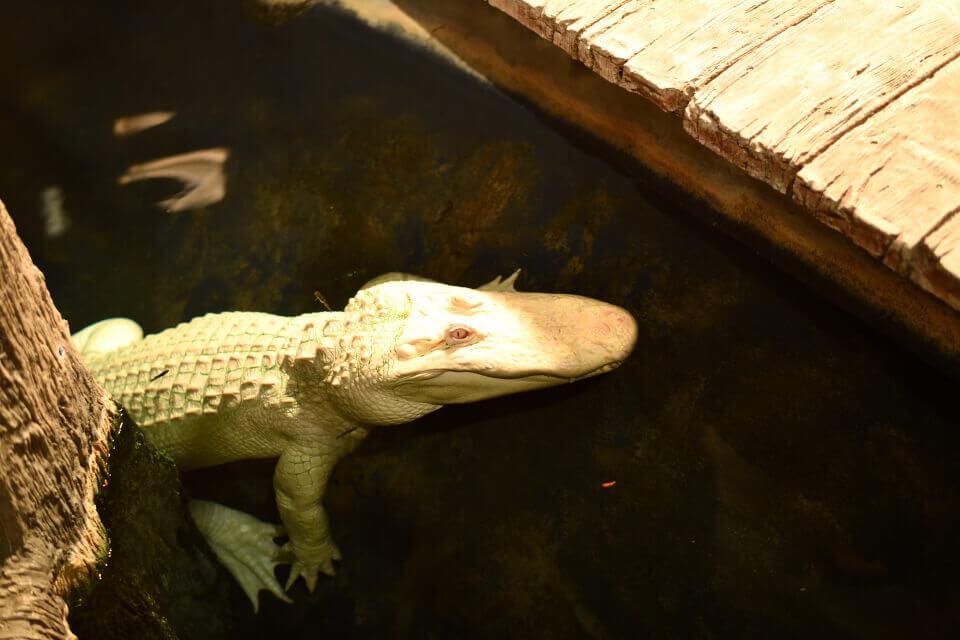 ニューポート水族館の写真