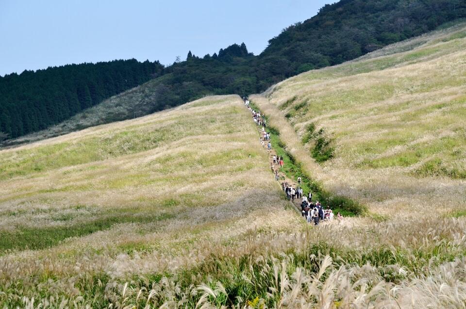 仙石原の秋ススキ写真