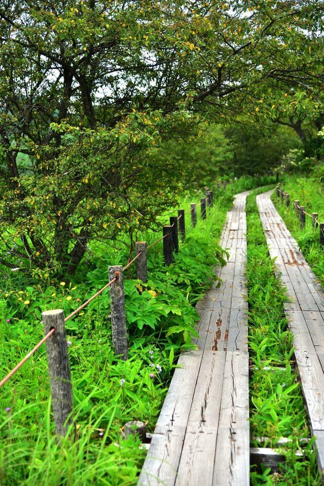 八島ヶ原湿原の写真