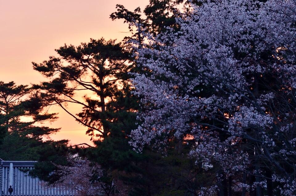 南禅寺の写真