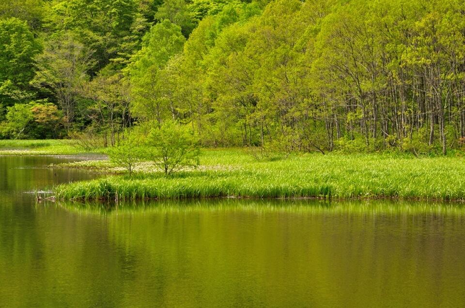 戸隠高原・鏡池の写真